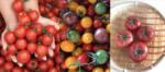 採りたてトマト各種(千葉県船橋市産)