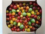 GOKO樹なり甘熟ミニトマト 4品種以上の詰め合わせ