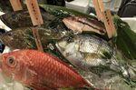 産直鮮魚のサカマ